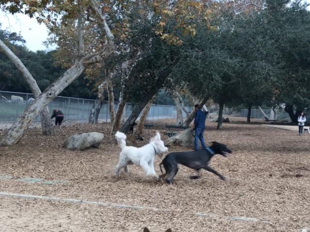 La Crescenta Dog Park