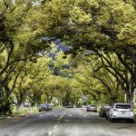 Tree Canopy in Northwest Glendale