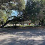 Glenwood Oaks Park Entrance 3